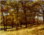 View of back of Seminary through autumnal trees from hillside